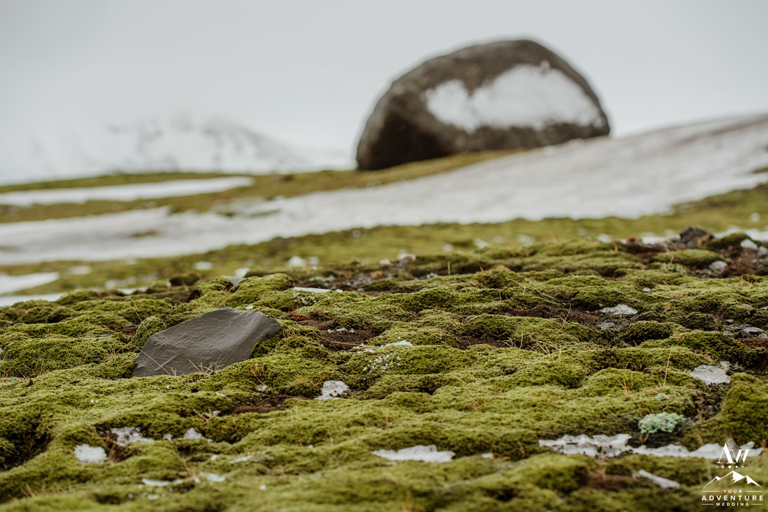 Moss in Iceland in March