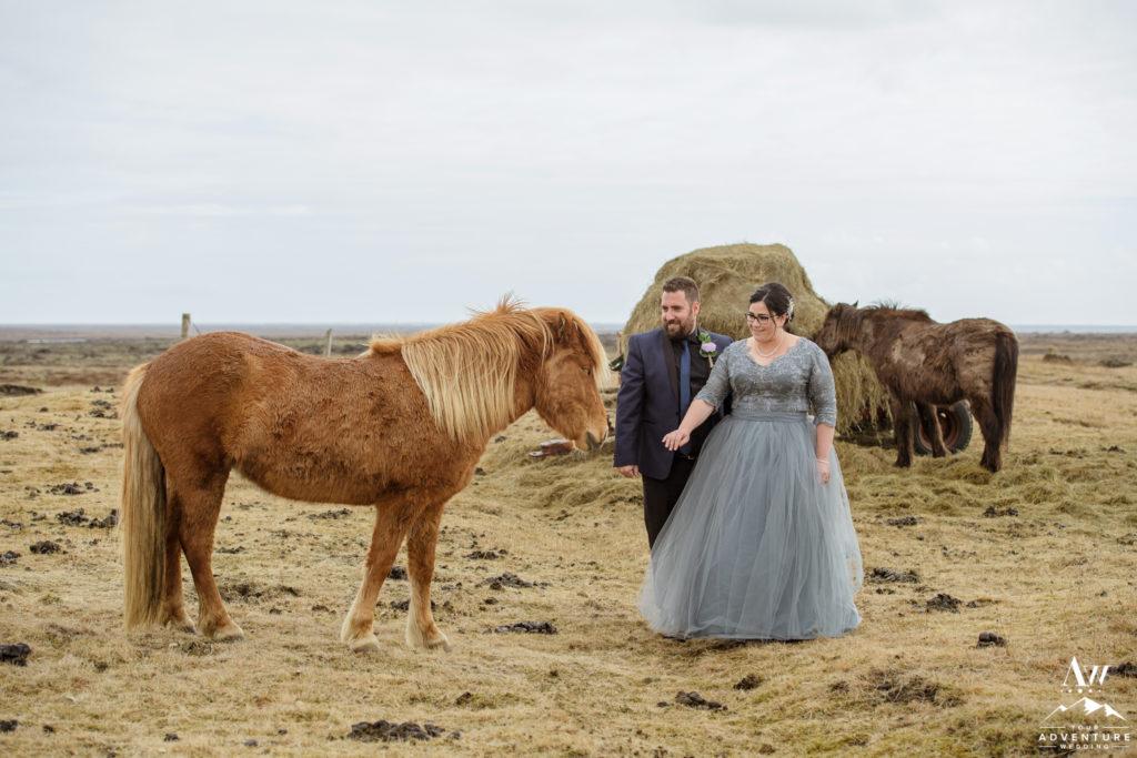 Iceland Wedding Couple Petting Icelandic Horses