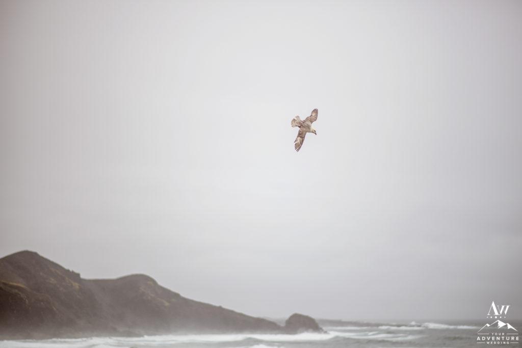 Bird Flying Above Cliffs during Iceland Wedding