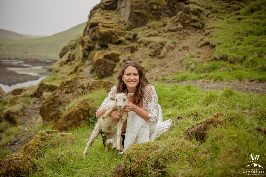 Bride Cuddling a lamb on Iceland Wedding Day