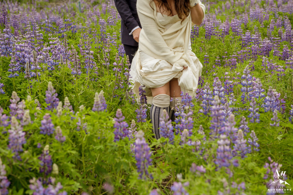 Bride walking through field of Lupine in Iceland