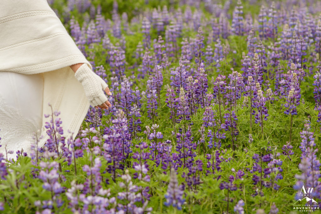 Iceland Bride touching lupine