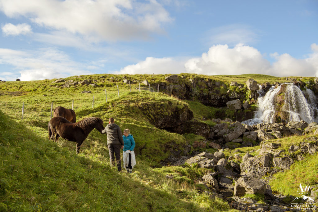 Iceland Elopement Couple petting an Icelandic horse