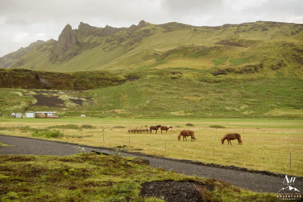 Icelandic Horses Outside of Hotel Kria